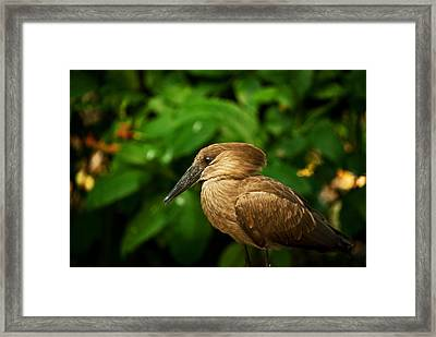 Golden Brown Wil 309 Framed Print