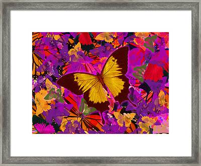 Golden Butterfly Painting Framed Print by Alixandra Mullins