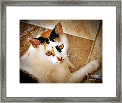 Golden Calico Framed Print by Phyllis Kaltenbach