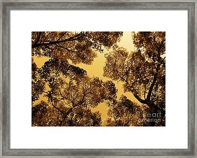 Golden Camphor Framed Print by CML Brown