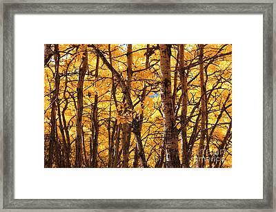 Golden Canopy Framed Print by Gerry Bates