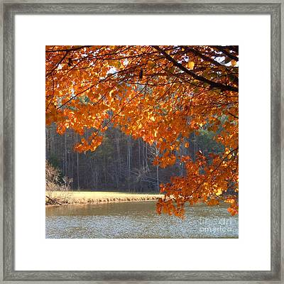 Golden Canopy Framed Print by Pauline Ross