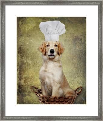 Golden Chef Framed Print by Susan Candelario