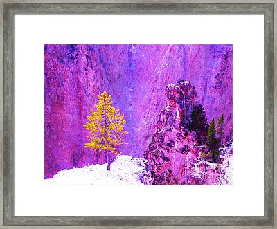 Golden Christmas In Yellowstone Framed Print by Ann Johndro-Collins