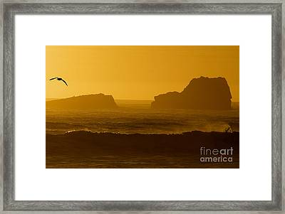 Golden Coast Framed Print