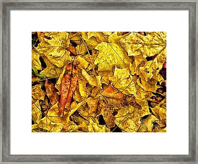 Golden Colors Of Fall Framed Print