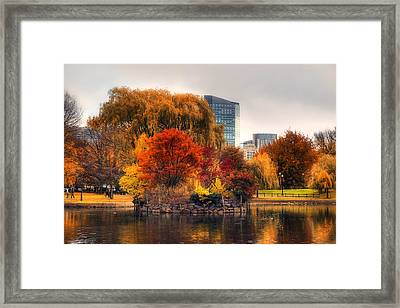Golden Common Framed Print by Joann Vitali