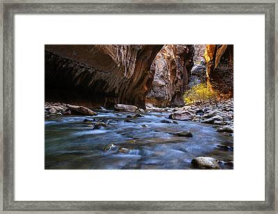 Golden Cottonwoods In The Narrows Framed Print by Andrew Soundarajan
