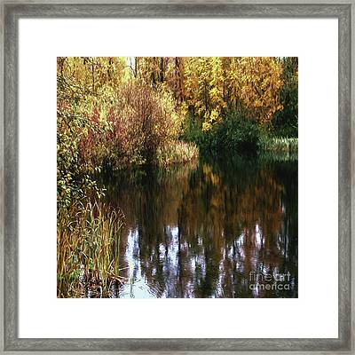 Golden Creek Framed Print