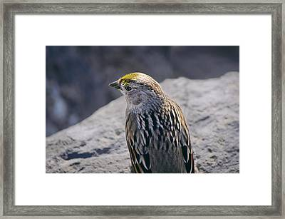 Golden Crown Framed Print