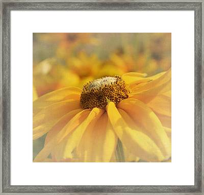 Golden Crown - Rudbeckia Flower Framed Print by Kim Hojnacki