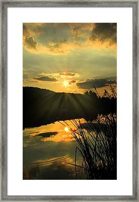 Golden Day Framed Print by Cindy Haggerty