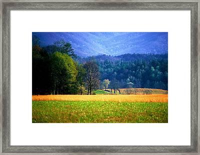 Golden Day Framed Print
