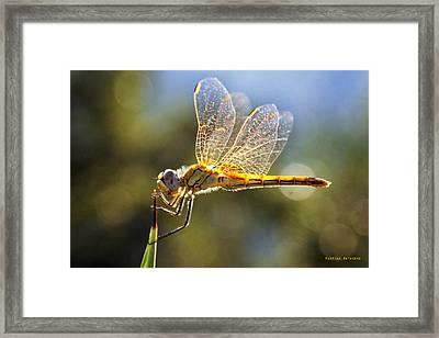 Golden Dragonfly Framed Print by Martina  Rathgens