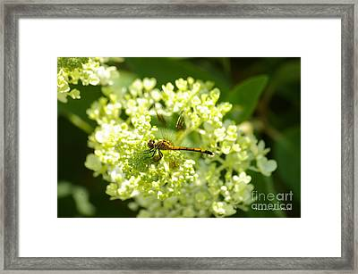 Golden Dragonfly Framed Print by Tannis  Baldwin