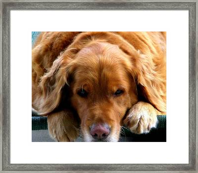 Golden Dreams Framed Print