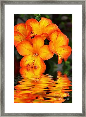 Golden Dreams Framed Print by Kaye Menner