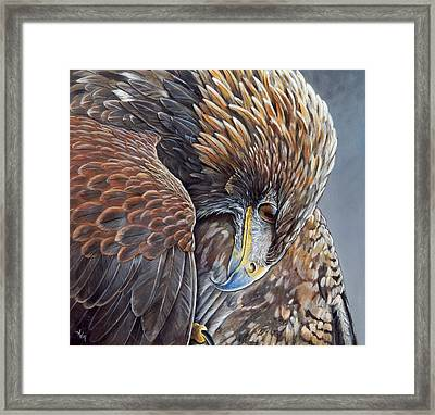 Golden Eagle Framed Print