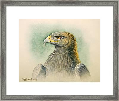 Golden Eagle Portrait Framed Print by Paul Krapf