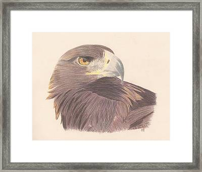 Golden Eagle Study Framed Print