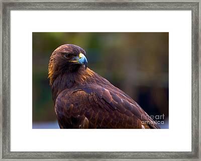 Golden Eagle Framed Print by Terry Horstman