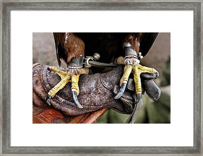 Golden Eagle's Feet Framed Print by Alex Hyde