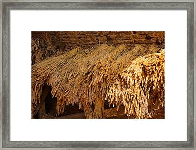 Golden Ears Of Wheat Framed Print by Dany Lison