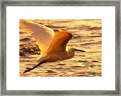 Golden Egret Bird Nature Fine Photography Yellow Orange Print  Framed Print