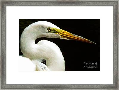 Golden Eye Framed Print by Susan Duda