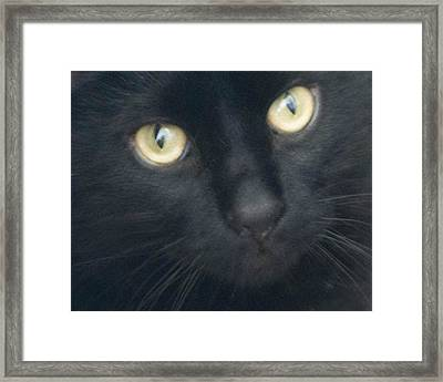 Golden Eyes Framed Print by Rhonda Humphreys