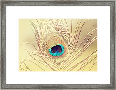 Golden Feather Framed Print by Amy Tyler