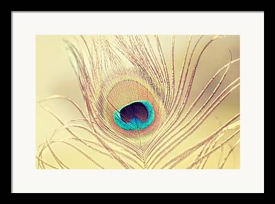Bright Feathers Framed Prints