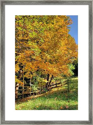 Framed Print featuring the photograph Golden Fenceline by Gordon Elwell