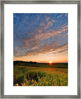Golden Fields Framed Print by Davorin Mance