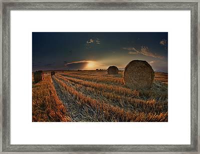 Golden Fields Framed Print by Nikolay Sirakov