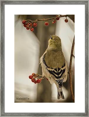 Golden Finch Song Framed Print