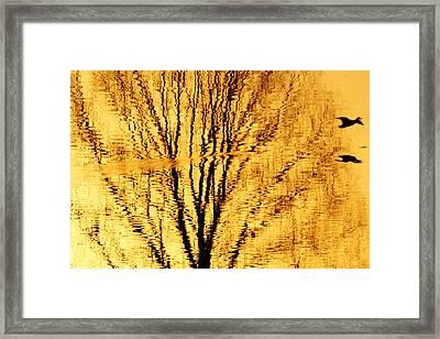 Golden Flight Framed Print