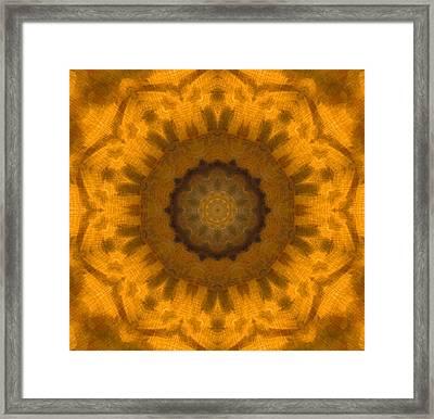 Golden Flower Framed Print by Dan Sproul