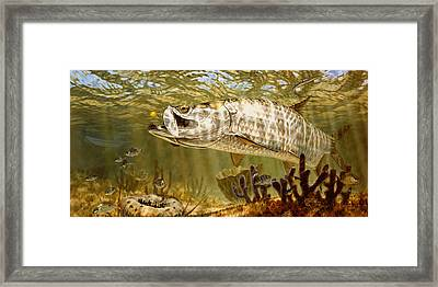 Golden Fly Tarpon Framed Print