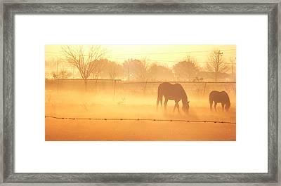 Golden Forage Framed Print