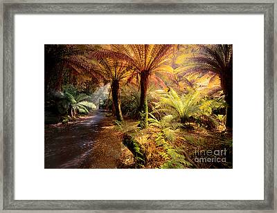 Golden Forest Framed Print