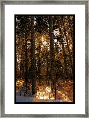 Framed Print featuring the photograph Golden Forrest by Michaela Preston