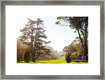Golden Gate Park San Francisco Framed Print