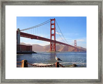 Golden Gate Seagull Framed Print by Inge Johnsson