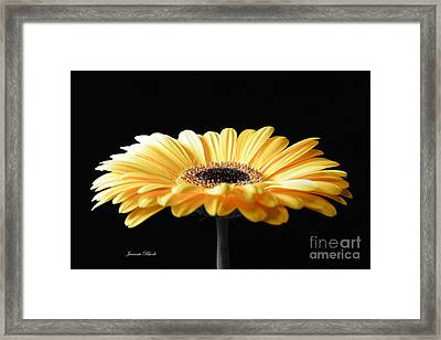 Golden Gerbera Daisy No 2 Framed Print