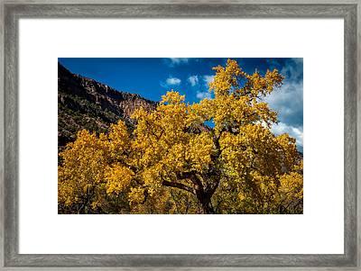 Golden Glory Framed Print