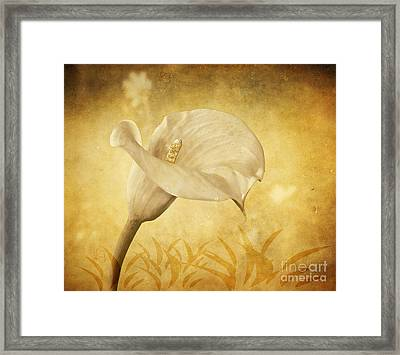 Golden Glow Cala Lily Framed Print