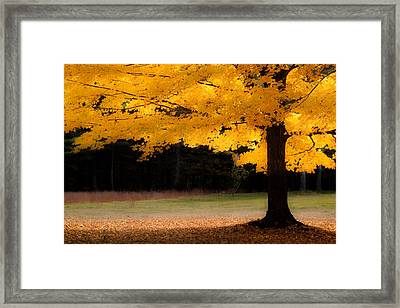 Golden Glow Of Autumn Fall Colors Framed Print by Jeff Folger
