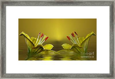 Framed Print featuring the photograph Golden Glow by Shirley Mangini