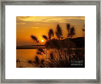 Framed Print featuring the photograph Golden Glow by Trena Mara